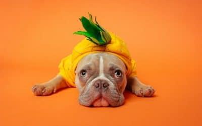 Cresce il settore Pet shop: il benessere degli animali al primo posto